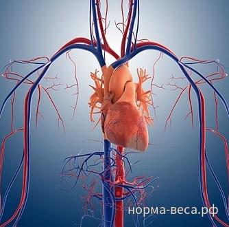 Влияние избыточного веса на сердечно-сосудистую систему: перечень ...